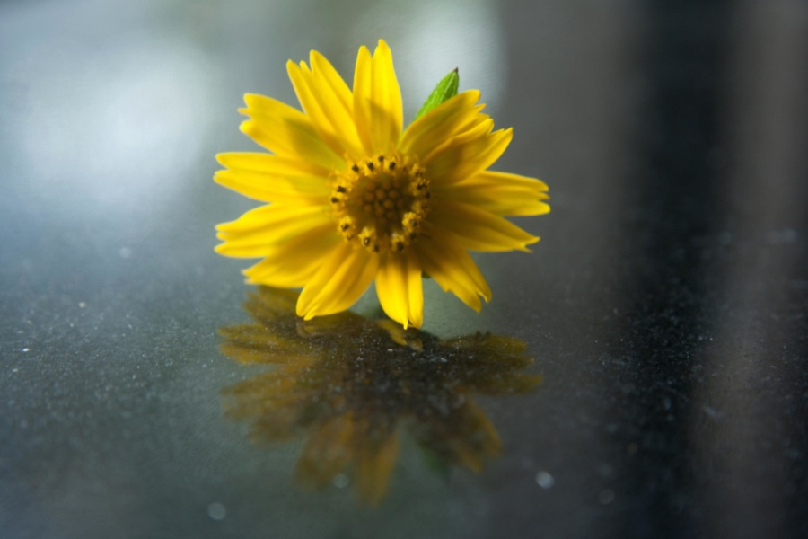 flower, sunflower, plant, pollen, petals