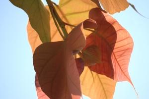 Hoja, cielo, otoño, rama, marrón