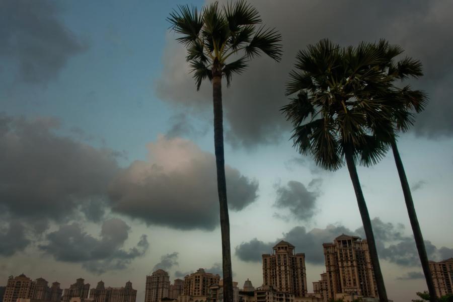 palm tree, sunset, city, dusk, building, sky, tree