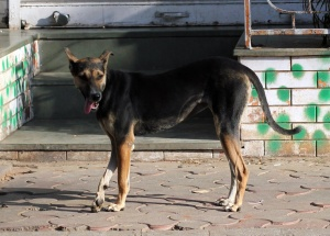 dog, animal, street, canine, pet