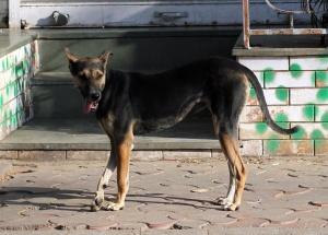 สุนัข สัตว์ ถนน สุนัข สัตว์เลี้ยง