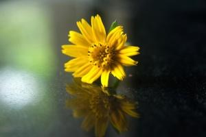 Amarillo, flor, flor, girasol, hierba, planta, hoja
