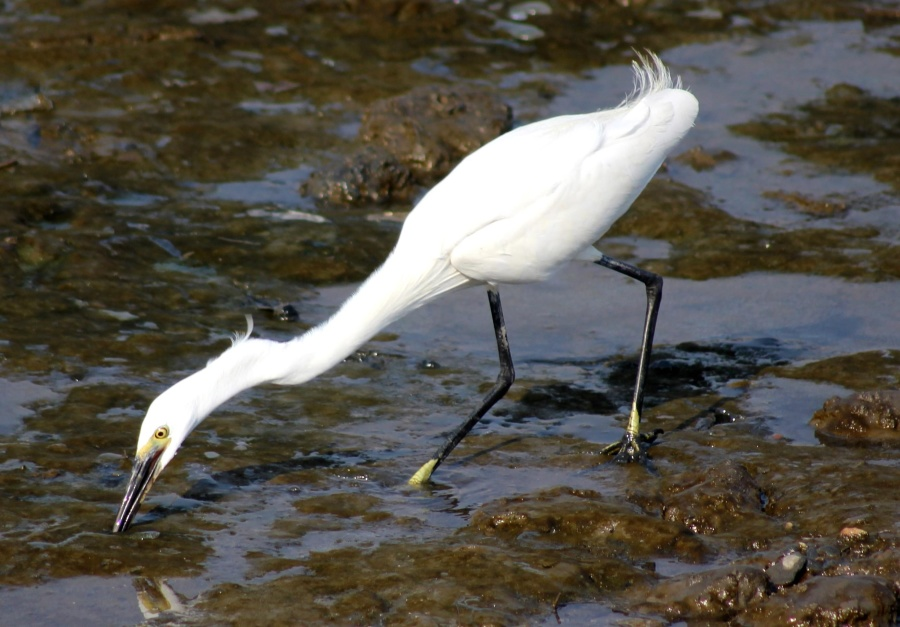 white, bird, heron, animal, ground