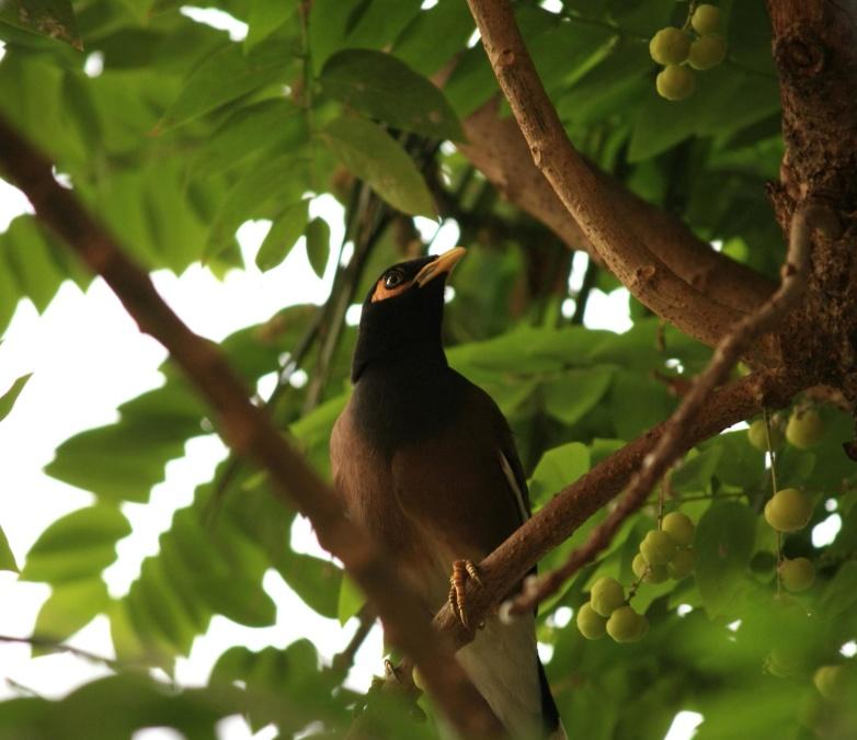 bird, exotic, tree, branch