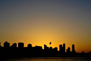sunset, bird, flying, city, architecture, urban, cityscape, building