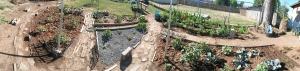 Jardín, patio trasero, exterior, hierba, vegetal
