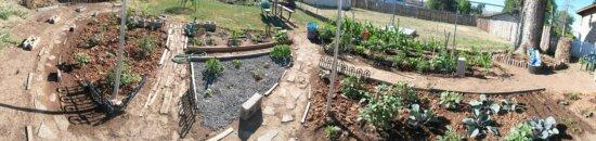 garden, backyard, exterior, herb, vegetable