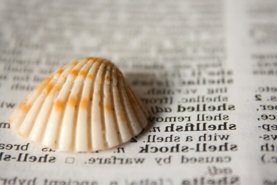 shell, dictionary, covering, text, book
