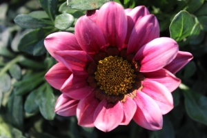 Fleur, pétale, plante, fleur, jardin, fleur, rose, flore, nectar