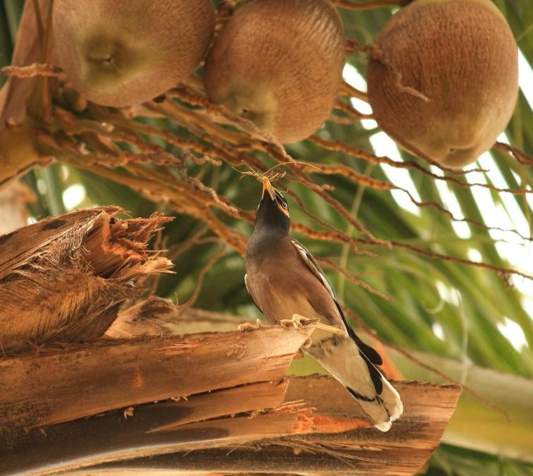 coconut tree, coconut, bird, tree