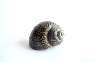 Coquille, mollusque, escargot, anima
