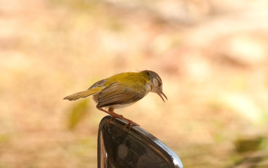 small bird, mirror, bird, animal, object