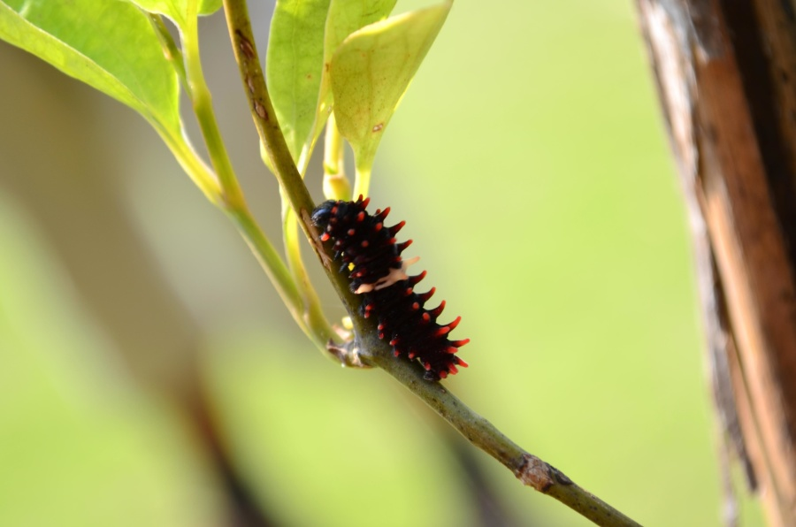 insect, caterpillar, leaf, animal