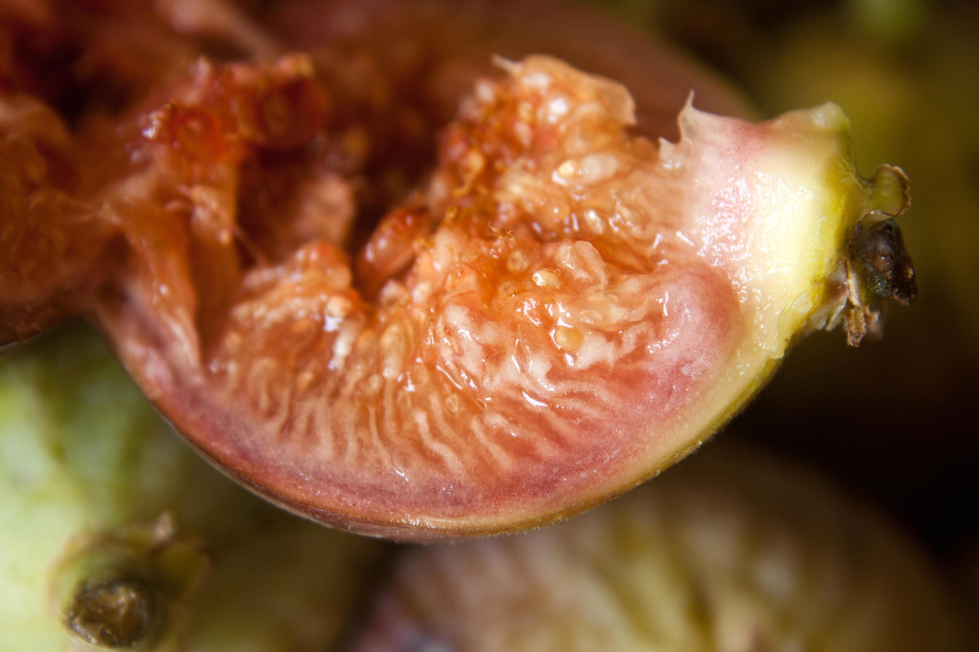 low sugar fruit fig fruit
