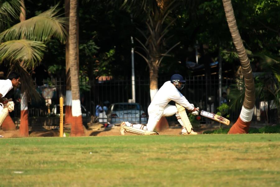 cricket sport, grass, field, player, game