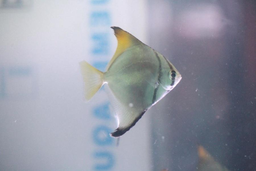fish, animal, aquarium, freshwater fish