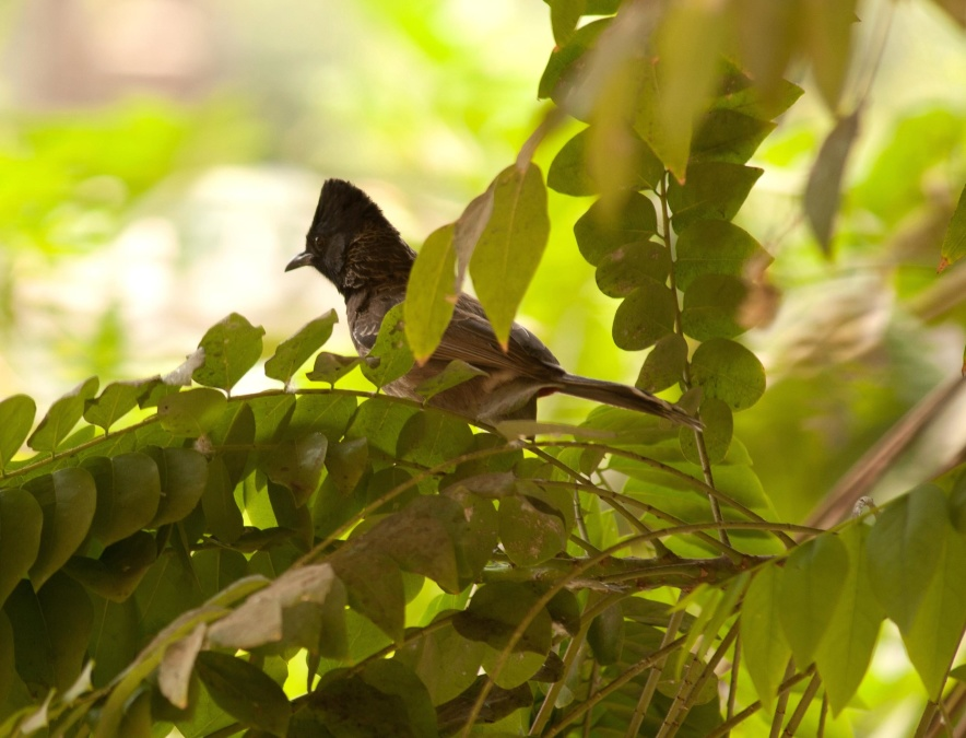 bird, animal, leaf, plant, tree, branch