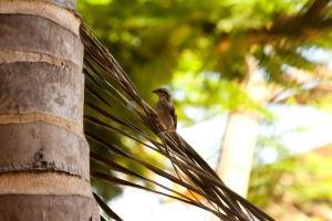 sparrow, tree, bird, animal