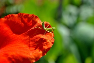 green, insect, flower, animal, petal