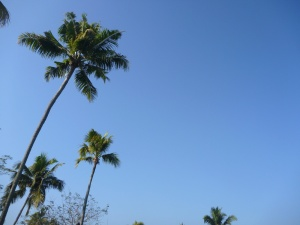 palm tree, sky, blue sky