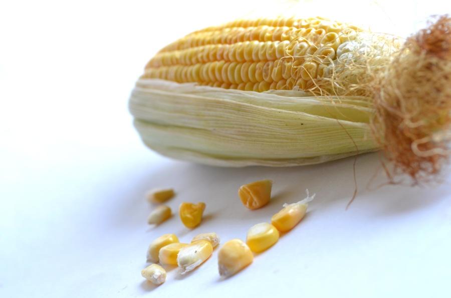 cord, seed, food, kernel
