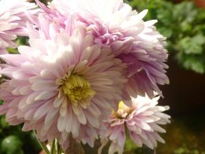 Fleur, fleur, jardin, blosom, pistil, nectar
