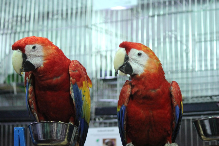 exotic, macaw parrot, bird, parrot, animal, colorful, red