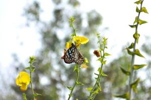 flor amarela, de borboleta, Prado, grama