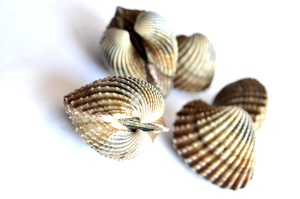 Seashell, mollusco, chiudere, marrone
