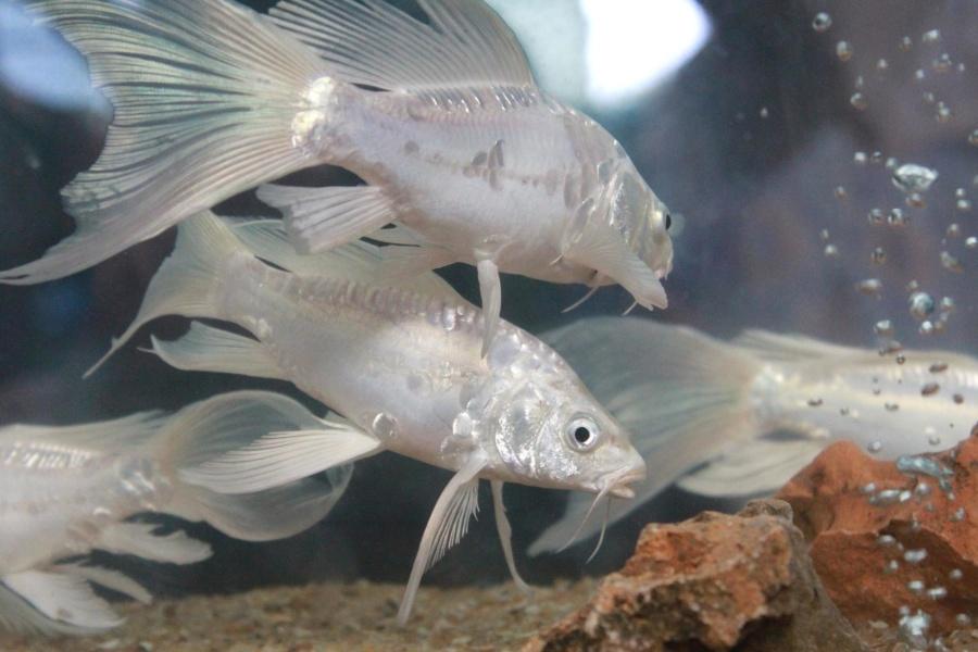 white, fish, animal, underwater, aquarium