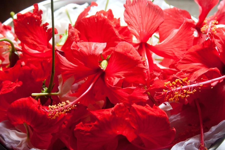 hibiscus, flower, petal, red, pistil, bouquet