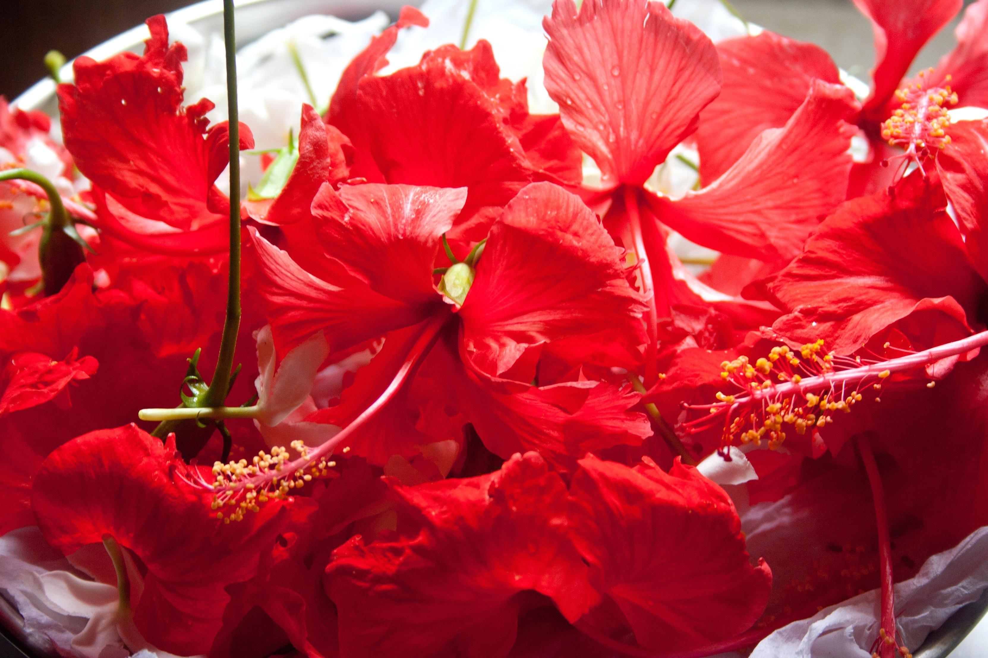 Free Picture Hibiscus Flower Petal Red Pistil Bouquet