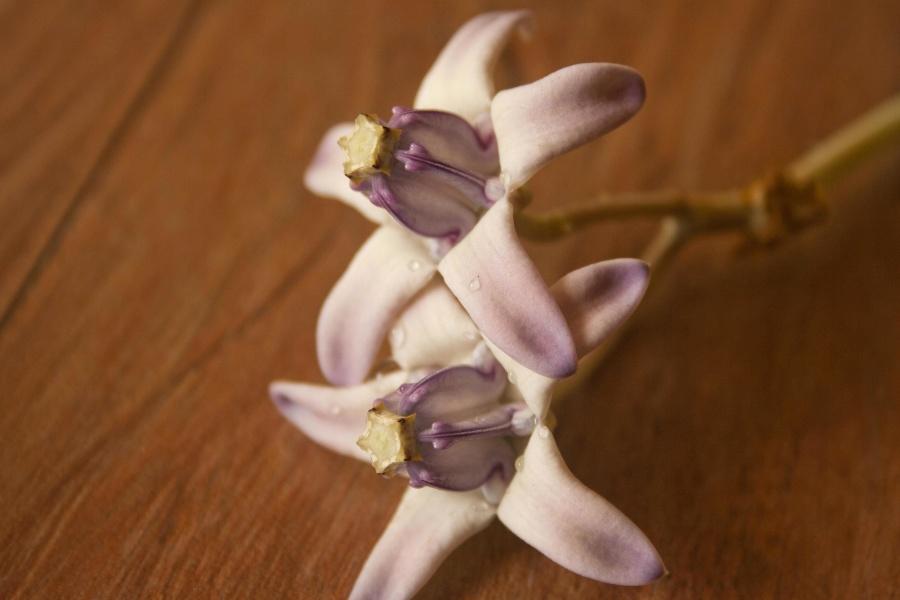 petal, pistil, beautiful, branch, flower