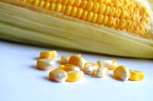 food, corn, kernel, grain, seed, vegetable