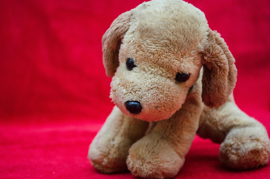 soft, toy, dog, puppy