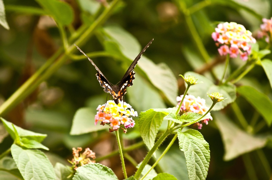 butterfly, insect, flower, plant, leaf, branch