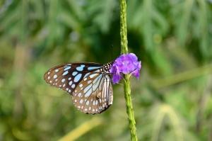 Blau, metamorphose, schmetterling, insekt, blau