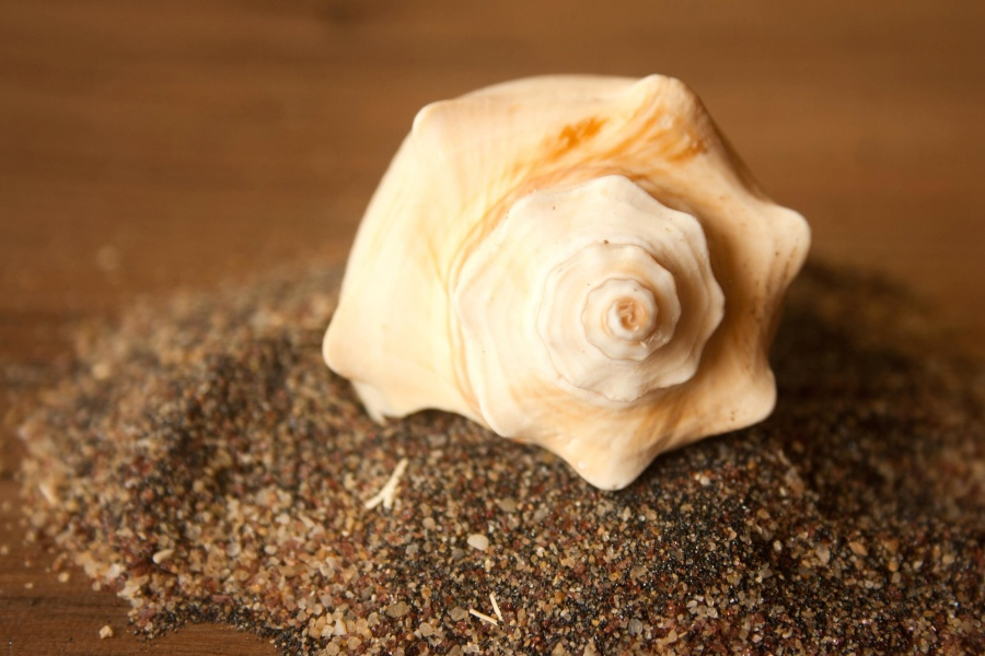 seashell, sand, decoration, still life