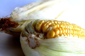 food, maize, vegetable, corn, leaf, seed