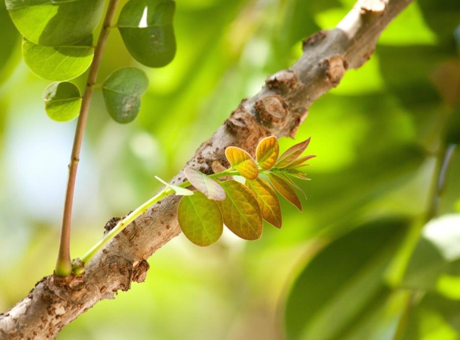 tree, branch, herb, green leaves, leaf