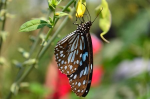Motyl, przemieniać, zwierzę, kwiat, owad