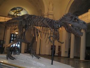 Dinosaurio, esqueleto, hueso, fósil, museo, dinosaurio, triceratops