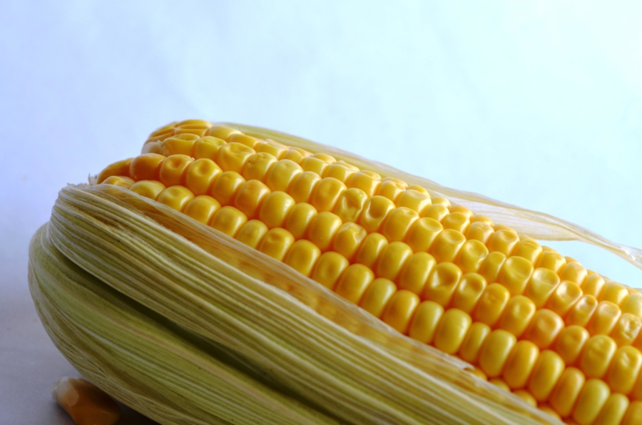 corn, vegetable, corn, grain, kernel, seed