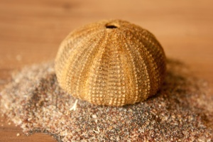 seashell, sand, still life, brown, object, decoration, mollusk