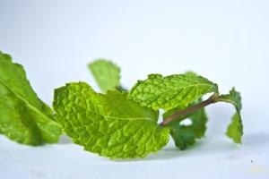 зелени листа, листа, растителни, клон, билка