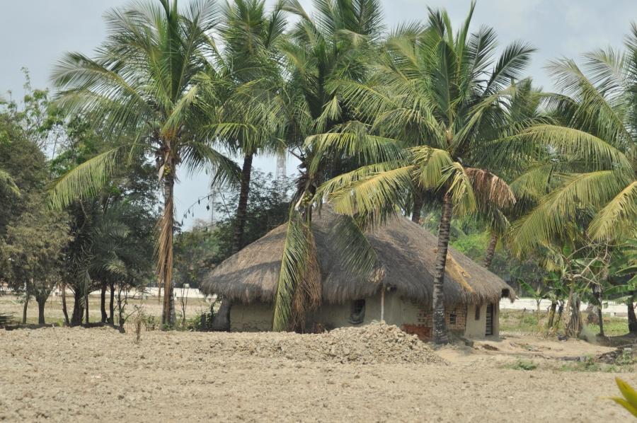 coconut, palm tree, wilderness, Africa, landscape, exotic, Safari, summer