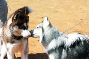 pet, dog, canine, animal