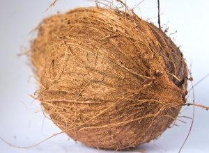 coconut, bark, food, diet