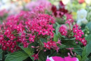 pink flower, flower, plant, blossom, petal, garden