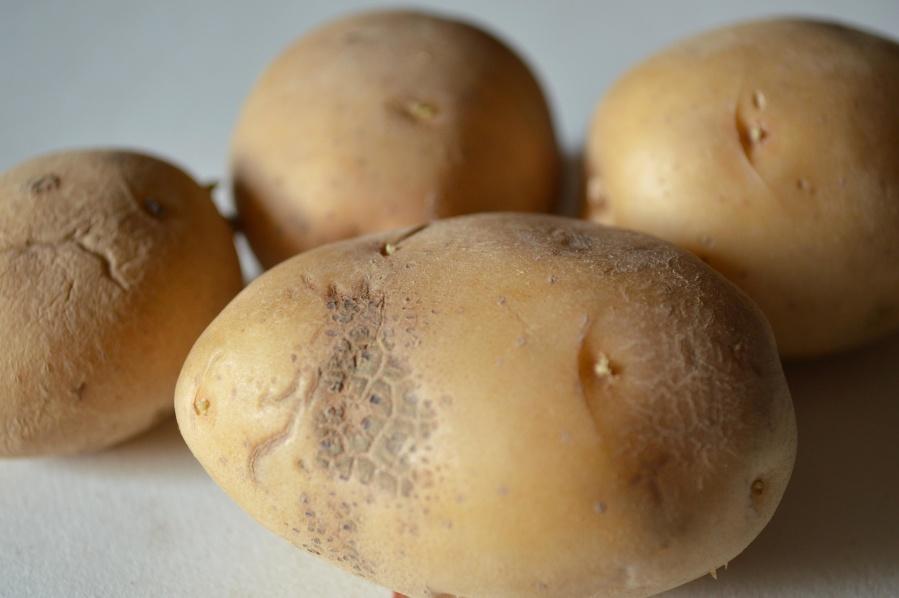 potato, food, sweet potato, agriculture, vegetable